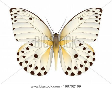 Beautiful butterfly isolated on a white background. Calypso caper white butterfly. 3D illustration