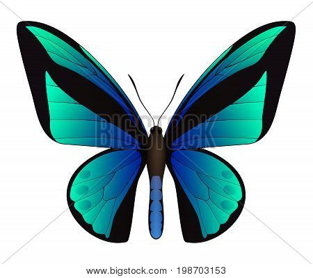 Beautiful butterfly isolated on a white background. Ornithoptera goliath birdwing butterfly. 3D illustration