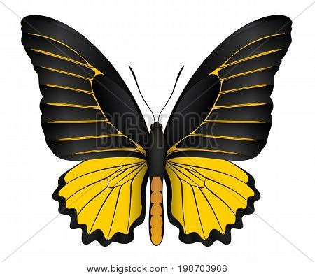 Beautiful butterfly isolated on a white background. Ornithoptera brookiana butterfly. 3D illustration