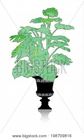 Silhouette of a big monstera with green foliage in an elegant flowerpot.