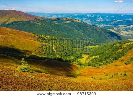Hillside With Forest On Weathered Grassy Slope