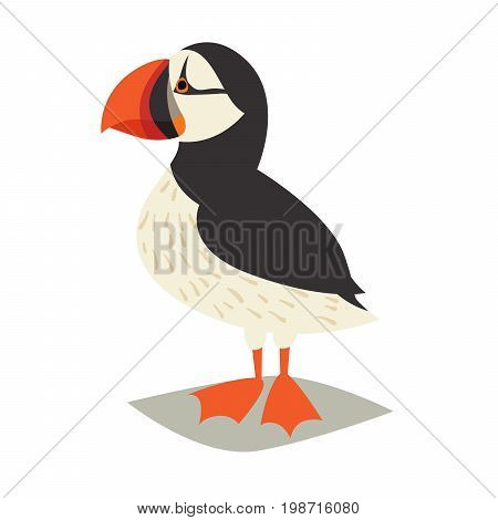 Puffin bird icon. Cartoon Icelandic puffin. Vector illustration isolated on white background
