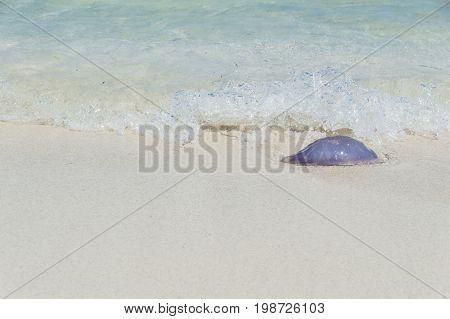 Medusa a orillas de la playa en el mediterráneo