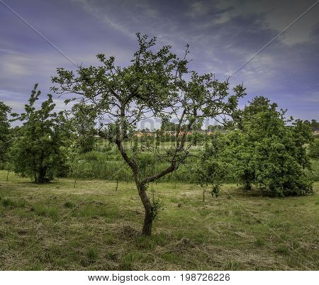 Beautiful skinny tree in the foreground with a cloudy blue sky background on a summers day