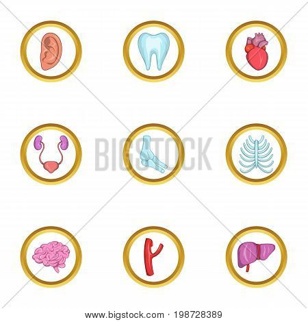 Intern organs icon set. Cartoon set of 9 intern organs vector icons for web isolated on white background