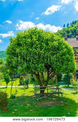 A Solitary Tree Is In The Center Of The Lawn In The Monastery Of Moraca. Montenegro.