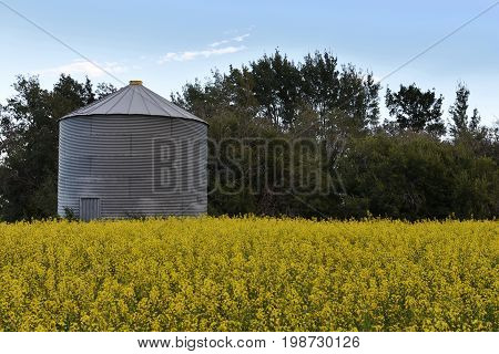 An image of a single silo in a canola field.