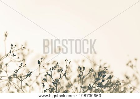 Nature white background with vague fragile twigs with small buds and flowers. Space for logo or copyright poster
