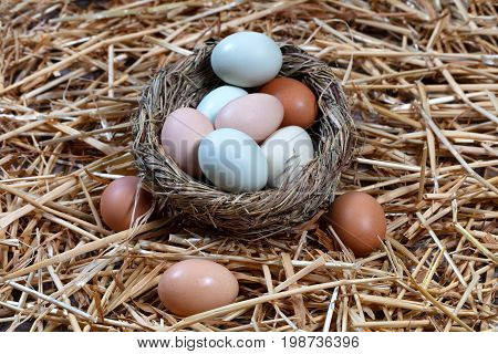 Organic raw eggs in different natural colors in nest egg on straw. Easter holiday background.