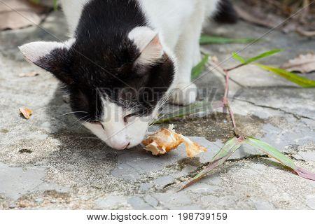 Stray Cats Eat Fish Bones In Thailand.