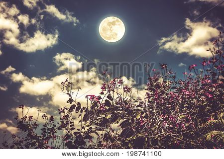 Flowers Blooming Against Night Sky And Clouds With Bright Full Moon. Vintage Tone.