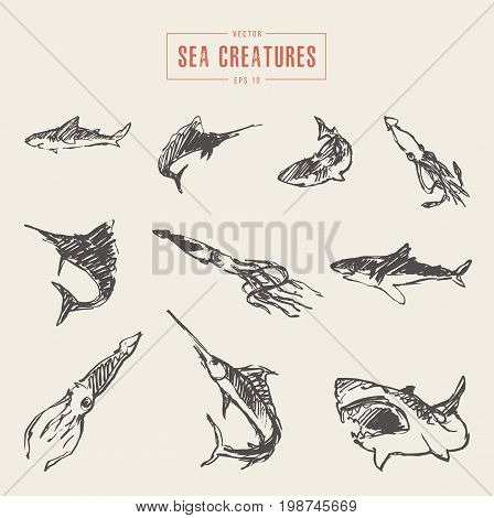 Collection of realistic sea creatures, hand drawn vector illustration, sketch