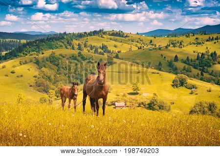 Horse With Little Foal In A Mountain Valley