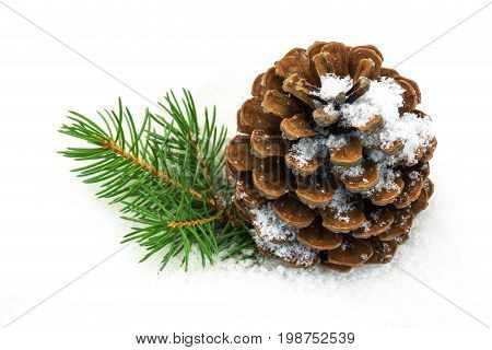 Pinecone in the snow close u of christmas decoration