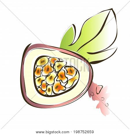 Passion fruit, maracuja. Vector illustration, isolated on white background