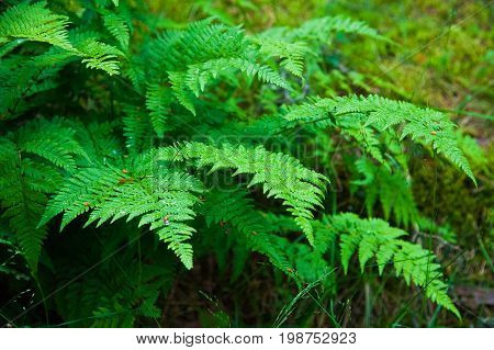Small Fern Tree In The Forest