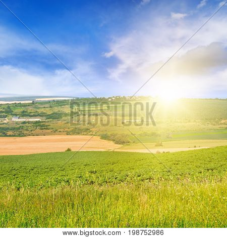 spring field and sunrise on blue sky