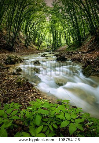 Mountain river in a deep spring forest