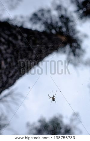 Spider on a web in the forest closeup. Trap for insects