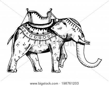 Indian elephant engraving vector illustration. Scratch board style imitation. Hand drawn image.