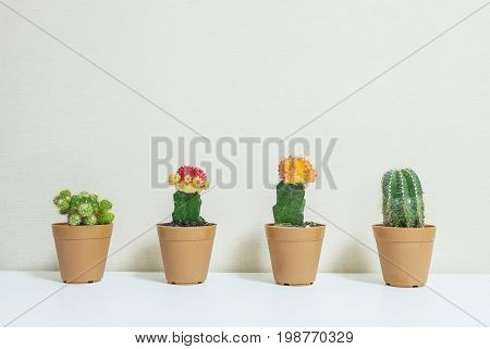 Closeup fresh green cactus and colorful cactus in brown plastic pot for decorate on blurred wooden white desk and wall textured background in room in black and white tone with copy space