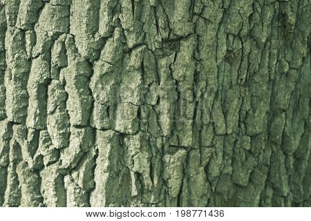 Beautiful Bark Texture of Oak Tinted in Green Color. Photo for Decoration of business card for Lumber or Timber Company.