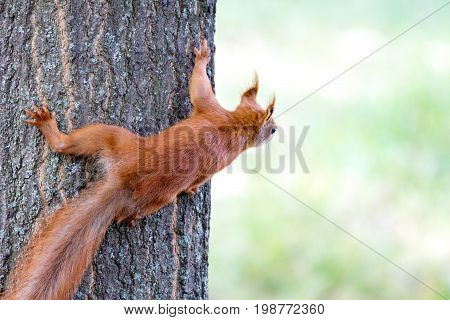 Image of a small rodent squirting peeps out on a tree trunk
