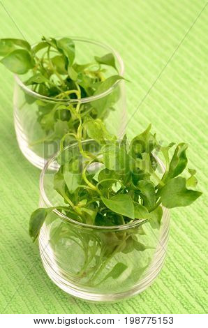 Fresh watercress in a glass,organic vegetables for cooking