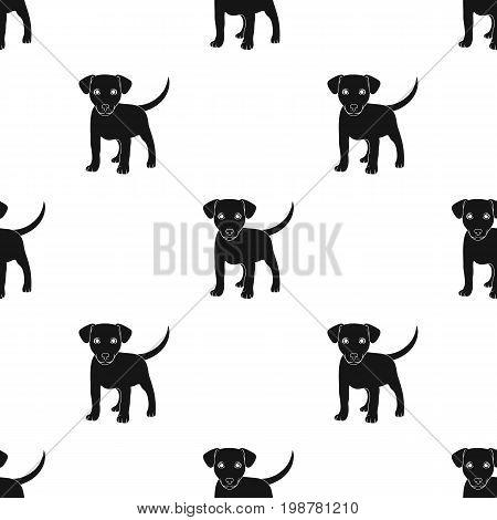 Puppy labrador.Animals single icon in black style vector symbol stock illustration .