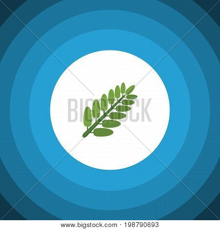 Leaves Vector Element Can Be Used For Acacia, Leaf, Leaves Design Concept.  Isolated Acacia Leaf Flat Icon.