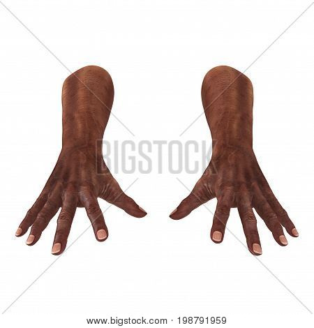 Old african man hands on a white background. 3D illustration