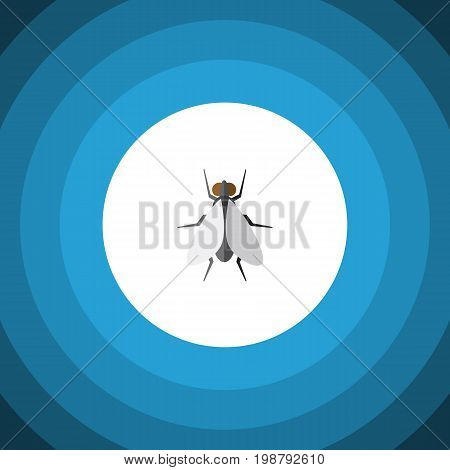 Hum Vector Element Can Be Used For Insect, Fly, Hum Design Concept.  Isolated Insect Flat Icon.