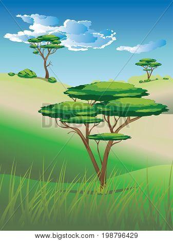 African Savanna Landscape