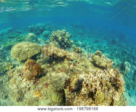 Undersea landscape with coral reef. Hard coral shapes. Small coral fishes. Tropical fishes in wild nature. Turquoise shallow sea water wildlife. Sea bottom with coral ecosystem. Tropic snorkeling