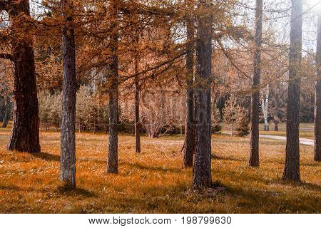 Taiga forest is the largest land biome in the world, its area is 15 million km2 and is huge area landscape zone of Russia. Taiga is characterized by coniferous forests: spruce, fir, larch and pine.