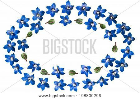 Festive oval flower vignette. Blue delphinium flowers isolated on white. Top view flat lay
