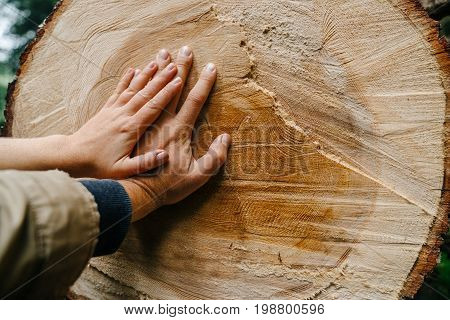 pair of hands of men and girls leaned against a sawn wood. The concept of environmental protection. Nature and humanity.
