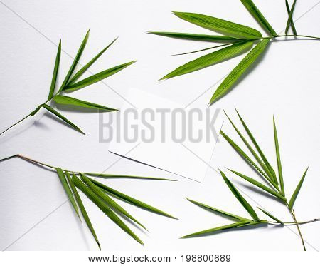 Bamboo green leaf and blank postcard. Bamboo leaf top view on white background. Bamboo decor. Spa or beauty banner template with place for text. Blank card with tropical leaves. Bamboo banner