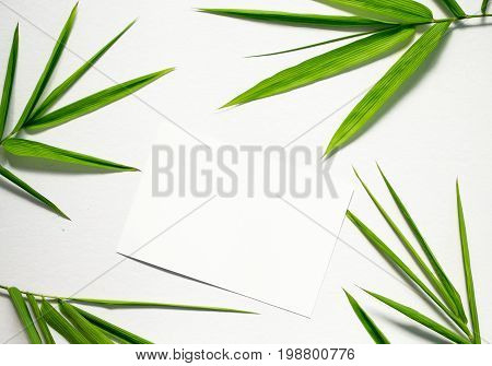 Zen flat lay with green leaf and white paper. Bamboo leaf floral arrangement on white background. Bamboo decor. Spa beauty banner template with place for text. Blank card with bamboo tropical leaves