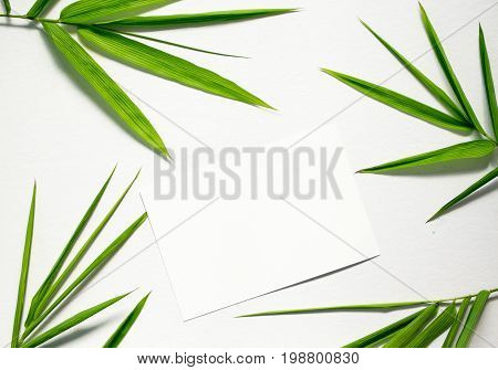 Clean flat lay with green leaf and card. Bamboo leaf and blank paper on white background. Bamboo decor. Spa or beauty banner template with place for text. Blank card with tropical leaf. Bamboo design