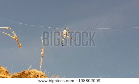 big withe spider in the spanish desert