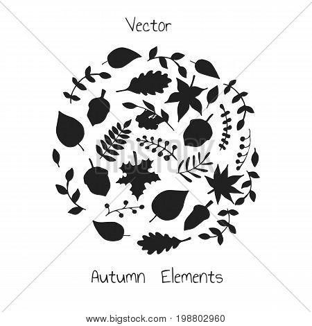 Vector hand drawn set of autumn elements silhouettes: foliage berries and acorns. Maple sycamore birch beech and oak tree leaves. For your design.