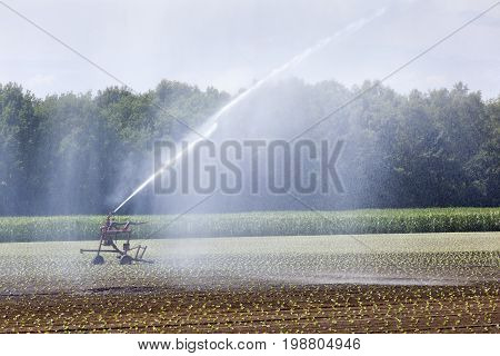 Irrigation of young crops on a field in the Netherlands