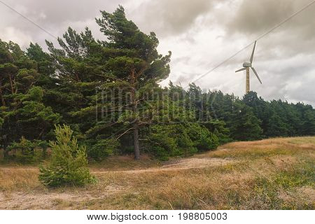 A wind generator in a pine forest in the dunes of the Baltic Sea in a strong wind