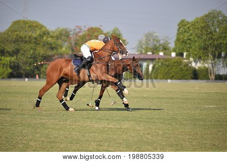 Horse Polo sport Player battle in game.