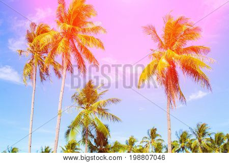 Coco palm tree in vivid orange. Tropical landscape with palms. Palm tree crown on blue sky. Sunny tropical island toned photo. Sunshine on palm leaf. Blooming tropical nature. Exotic island travel