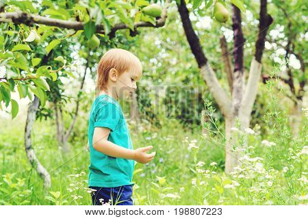 Curious Blond Boy Catching Insects In Garden. Cute Child Having Fun Outdoor.