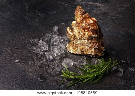 Top view of a composition of exotic oysters on a black table background. Fresh sea mollusks with crushed ice cubes and tarragon herbs. Expensive and tropical delicasy food. Copy space.