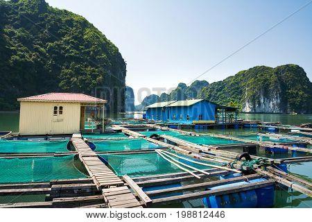 Fisherman Village And Fishpond Near Cat Ba Island, Vietnam