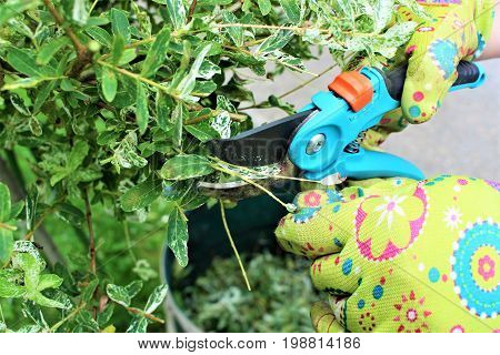 An image of cutting a plant - garden